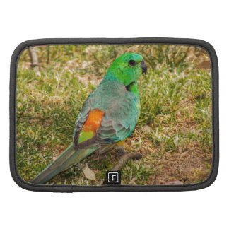 Red Rumped Parrot Organizer