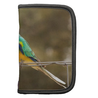 Red-rumped Parrot Planners