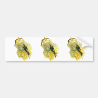 Red-rumped Swallow Bumper Sticker