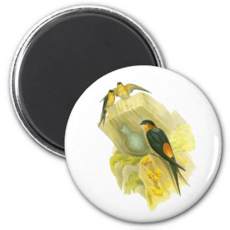 Red-rumped Swallow Magnet