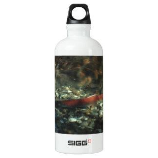 Red Salmon 01 Aluminum Water Bottle