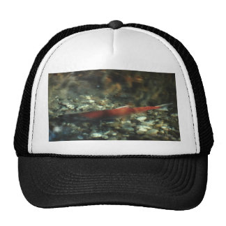 Red Salmon #01 Hat