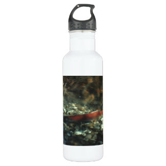 Red Salmon 01 Water Bottle