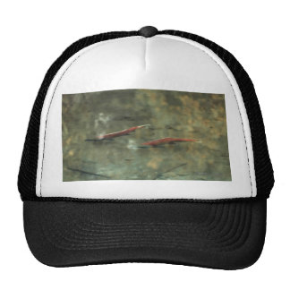 Red Salmon #02 Hats