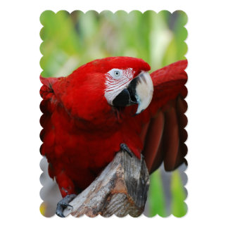 Red Scarlet Macaw 5x7 Paper Invitation Card