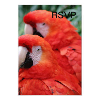 Red Scarlet Macaw 3.5x5 Paper Invitation Card