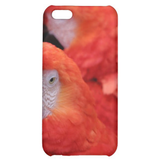Red Scarlet Macaw iPhone 5C Cases
