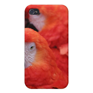 Red Scarlet Macaw iPhone 4 Cover