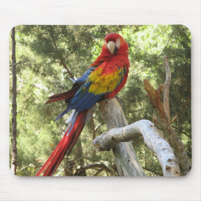 Red Scarlet Macaw Parrot Mousepad