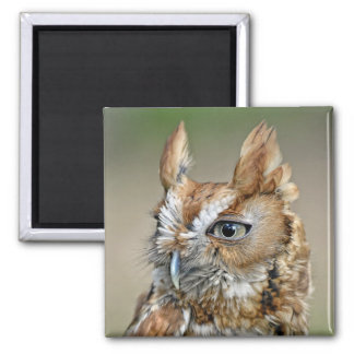 Red Screech Owl 2 Inch Square Magnet
