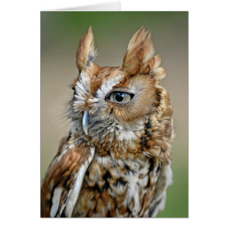Red Screech Owl Greeting Cards