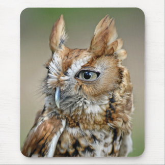 Red Screech Owl Mouse Pad