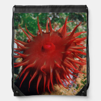 Red Sea Anemone In Pool Drawstring Bag