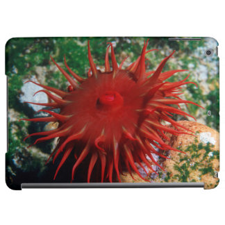 Red Sea Anemone In Pool iPad Air Cases