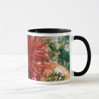 Red Sea Anemone In Pool Mug
