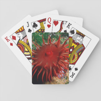 Red Sea Anemone In Pool Poker Cards