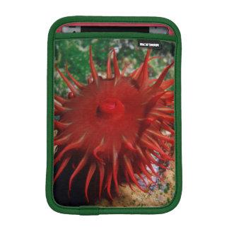 Red Sea Anemone In Pool Sleeve For iPad Mini