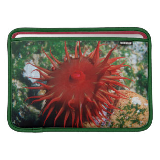 Red Sea Anemone In Pool Sleeves For MacBook Air