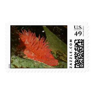 Red Sea Anemone Stamps