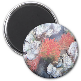 Red Sea Anome 2 Inch Round Magnet