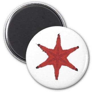 Red Sea Star Refrigerator Magnets