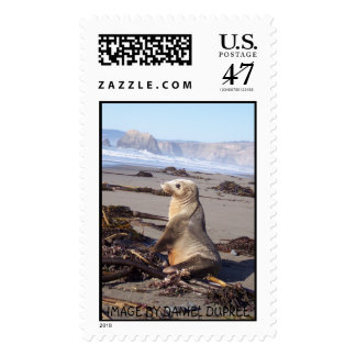 RED SEAL, IMAGE BY DANIEL DUPREE POSTAGE