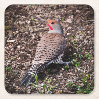 Red Shafted Northern Flicker Drink Coaster