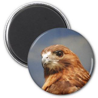 Red shouldered Hawk 2 Inch Round Magnet