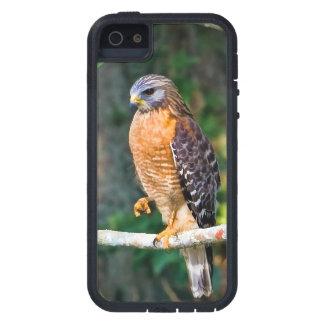 Red-Shouldered Hawk Bird iPhone SE/5/5s Case
