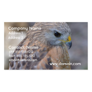 Red Shouldered Hawk Business Card
