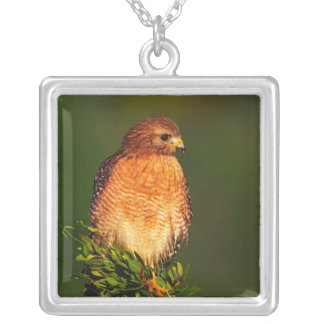 Red-shouldered Hawk (Buteo lineatus) in early Square Pendant Necklace