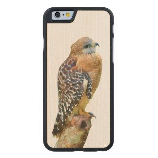 Red-Shouldered Hawk Carved Maple iPhone 6 Case