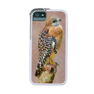 Red-Shouldered Hawk iPhone 5 Cases