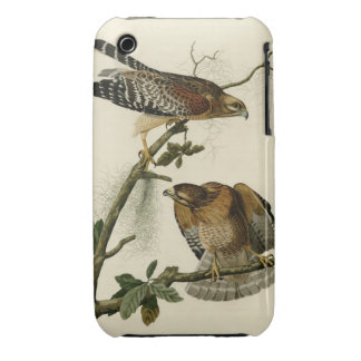 Red shouldered Hawk iPhone 3 Cover