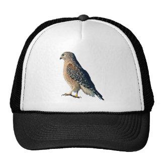 Red-shouldered Hawk Hat