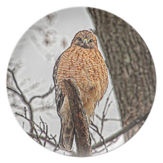 Red Shouldered Hawk in a tree Plate