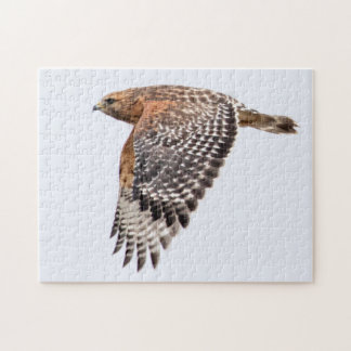 Red Shouldered Hawk in flight Jigsaw Puzzle