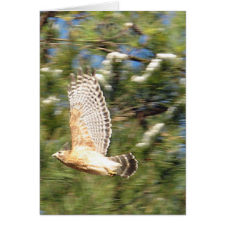 Red Shouldered Hawk in Flight Photography Design Card