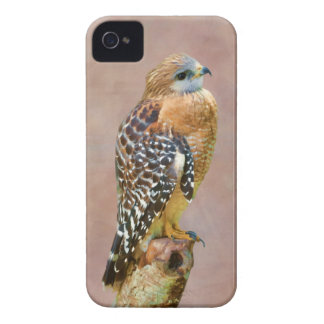 Red-Shouldered Hawk iPhone 4 Cover