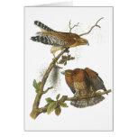 Red-shouldered Hawk, John Audubon Greeting Card