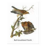 Red-shouldered Hawk, John Audubon Postcard