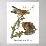 Red-shouldered Hawk, John Audubon Poster