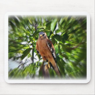 Red Shouldered Hawk Mouse Pads