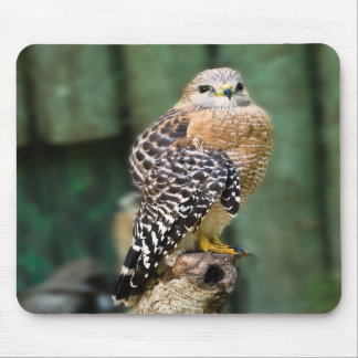 Red-shouldered Hawk Mousepad