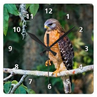 Red-Shouldered Hawk on a Limb Clock