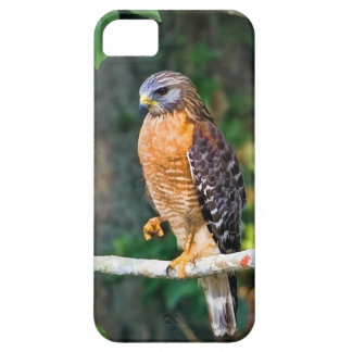 Red-Shouldered Hawk on a Limb iPhone SE/5/5s Case