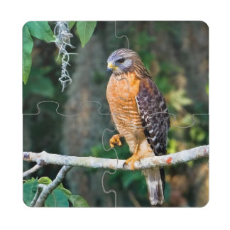 Red-Shouldered Hawk on a Limb Puzzle Coaster
