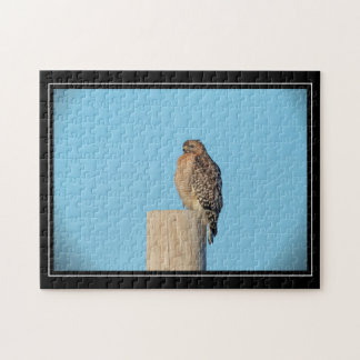 Red Shouldered Hawk on a post Jigsaw Puzzle