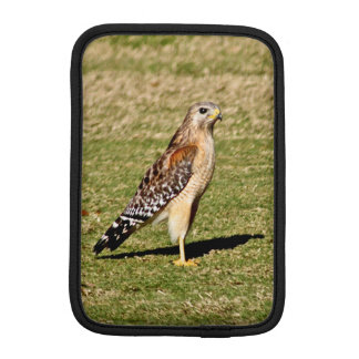 Red Shouldered Hawk on Golf Cours Sleeve For iPad Mini