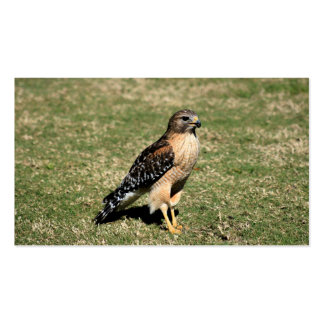 Red Shouldered Hawk on Golf Course Double-Sided Standard Business Cards (Pack Of 100)